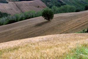 Aumentano i furti nelle campagne, Coldiretti stima i danni a 300 milioni di euro in un anno. Nel mirino del ladri bestiame, frutta e verdura, ma anche macchinari, arnie e vivai: gli agricoltori, in ginocchio, cercano soluzioni nella tecnologia