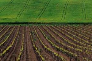 """Tra la riduzione di terreni coltivabili e le importazioni di cibi da paesi lontanissimi, l'abbandono delle campagne italiane costa all'agricoltura 400 milioni di euro all'anno. A dirlo i dati dell'Ispra, analizzati da Coldiretti, nell'""""Earth day"""""""