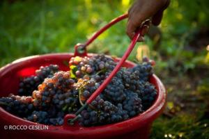 Production down, consumption stable, says Organization Internationale de la Vigne et du Vin