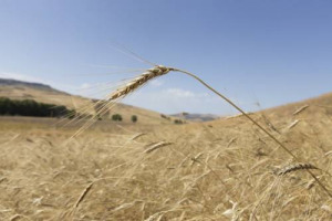 FoodDrinkEurope ha presentato un reclamo alla Commissione Europea contro l'Italia sulle indicazioni di origine in etichetta, una scelta che il Ministro Martina difende e che l'europarlamentare De Castro vuole regolamentare a livello comunitario