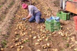 Sono 3,3 milioni i lavoratori delle imprese che operano nel sommerso, 100.000 in false cooperative. Agricoltura secondo settore per irregolarità, con un tasso del 23,4% (nella ristorazione è il 17,7%). Lo dice il rapporto Censis e Confcooperative