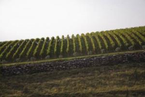 """Il protocollo di sostenibilità """"RRR"""" del Consorzio della Valpolicella si confronta coi colleghi internazionali: nasce il primo Sustainable Winegrowing Summit, che, partendo da Verona il 2 febbraio, creerà un Network internazionale di certificazioni"""