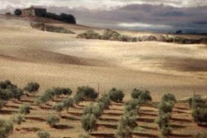 Dopo l'ingresso degli oliveti terrazzati della Città dell'Olio di Vallecorsa nel Registro Nazionale dei Paesaggi Rurali del Ministero delle Politiche Agricole, traguardo vicino per altri tre territori caratterizzati dall'ulivo simbolo del Mediterraneo