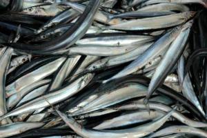 L'Italia dei prodotti tipici che nascono da mari, fiumi e laghi del Belpaese: 150 le Produzioni Agroalimentari Tradizionali ittiche riconosciute dal Ministero delle Politiche Agricole, nella mappa disegnata da Federcoopesca-Confcooperative