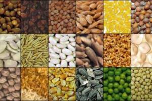 """Con l'ok della Ue all'acquisizione di Monsanto da parte di Bayer si concretizzerà il matrimonio del secolo tra i giganti della biotecnologia. Coldiretti, """"pericoloso per agricoltori, con il 63% del mercato dei sementi in mano a 3 multinazionali"""""""