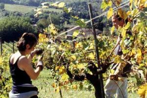 POCA, MA BUONA: ECCO LA VENDEMMIA 2003 SECONDO I VIGNAIOLI E ENOLOGI ITALIANI (GIACOMO TACHIS, EZIO RIVELLA, CARLO FERRINI, FRANCO GIACOSA)