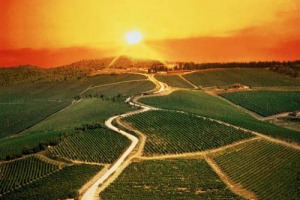 Climate 2050, drought in 99% of Italian vineyards