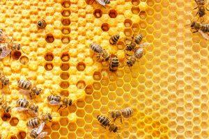 """Per monitorare lo smog nelle città arriva """"BEE-Kaeser"""", lo studio che usa le api come bioindicatore"""