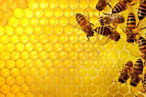 Miele, in Italia acquisti a +5,1%, ma crescono anche le importazioni. Così Coldiretti su dati Ismea