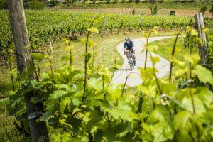 """La Franciacorta si prepara all'""""eno-tappa"""" del Giro d'Italia n. 101, il 23 maggio tra i filari"""