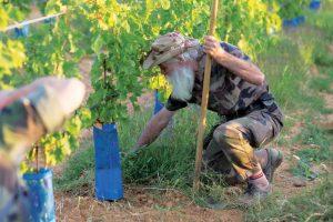 Dal campo di battaglia alla vigna: la nuova vita dei militari della Legione Straniera di Francia