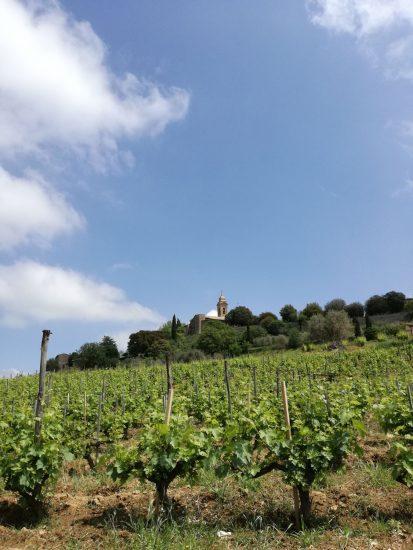 BRUNELLO, MONTALCINO, TERROIR, Su i Quaderni di WineNews