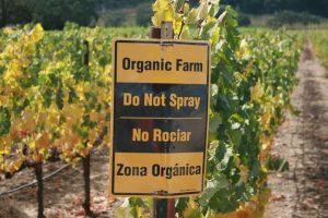 """Tra le nicchie del vino, il futuro è per le produzioni """"organiche"""" e rispettose dell'ambiente"""