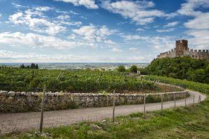 Soave e l'Irpinia, la Franciacorta Stage e il Porto Cervo Wine & Food Festival, save the date