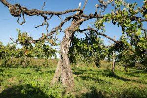 Dai grandi rossi ai migliori bianchi, proseguono le Anteprime nei territori top del vino italiano