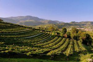 """""""Amarone in vetta"""" per la biodiversità: valorizzare il Monte Baldo per tutelare la Valpolicella"""