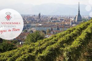 """Tra le tante vendemmie d'Italia, quest'anno per la prima volta è andata in scena anche quella urbana di Torino, tra la Vigna della Regina che domina la Mole, i palazzi storici, i portici della città, e i """"turet"""" da cui è sgorgata Barbera"""
