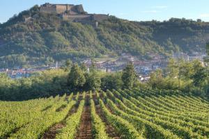 Tra le tendenze registrate da WineNews, per Vinitaly, c'è la crescita dei vini bianchi. Come il Gavi, simbolo bianchista del Piemonte, oggi realtà da 13 milioni di bottiglie, per l'85% all'export. Il presente ed il futuro secondo i produttori