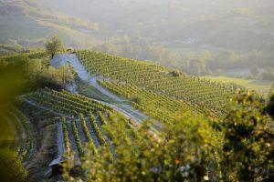 """Il """"concilio"""" di Gavi: il 25 maggio la """"Carta del Vino Responsabile"""" ed il """"Premio La Buona Italia"""""""