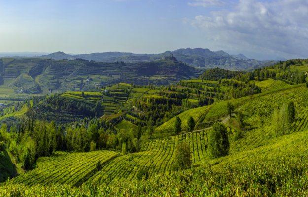 AGRICOLTURA, ALIMENTAZIONE, CIBO, COVID-19, FUTURO, TERRA, TERRITORIO, VALORI, vino, Italia