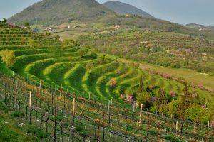 """I Volcanic Wines si scoprono di tendenza, nel Belpaese ecco la """"Carta dei suoli Vulcanici d'Italia"""""""