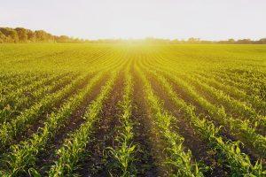 Ministero delle Politiche Agricole, ecco la firma sul decreto di modifica e semplificazione di Agea