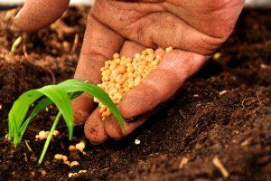 Pac, i tagli nel bilancio Ue non piacciono all'agricoltura italiana