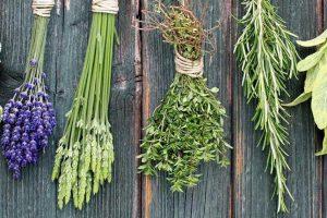 Una nuova legge disciplina coltivazione, raccolta e commercio delle piante officinali