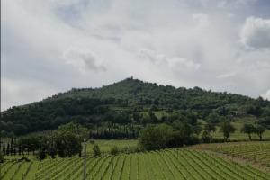 I Quaderni di WineNews - Il Brunello di Montalcino