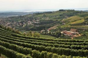 Il futuro dell'Amarone della Valpolicella, tra i più grandi vini d'Italia, passa dal ritorno al passato, a vini meno potenti e più eleganti, ma anche da una nuova comunicazione del territorio, che va fatto toccare con mano agli appassionati