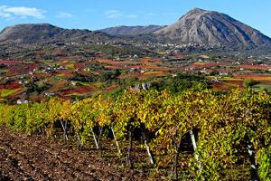 I vini della Campania crescono in visibilità, ma la Campania del vino? Tante diversità, forse troppe, rischiano di parcellizzare risorse e sforzi per far crescere la notorietà di un sistema produttivo dalle radici antiche, che guarda la futuro