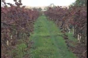 Spesso considerato alla stregua di un vinello, il Lambrusco è in realtà uno dei vini più venduti della gdo italiana, e spesso apripista di mercati stranieri, come è successo in passato con gli Usa, e come sta succedendo oggi in Brasile