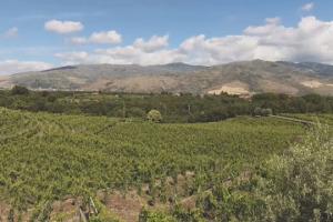 """Qualità, tenuta sulla quantità di produzione, lavoro sull'unicità del territorio: il futuro della viticoltura sull'Etna, uno dei fenomeni di maggior successo del vino italiano degli ultimi anni, secondo i produttori """"del vulcano"""""""