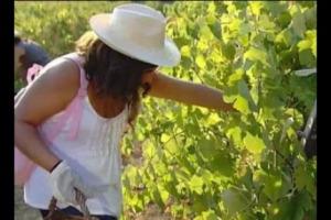 Si vendemmia anche sul mare, in Sicilia, da Cantine Settesoli, una delle cooperative più importanti del Sud, con oltre 2.000 viticoltori. Per un modello di impresa che produce benessere sociale, come spiega il sociologo Enrico Finzi (Astra Ricerche)