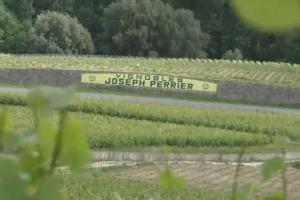 """Il mondo Champagne, con le su oltre 300 maison, 15.700 viticoltori e 33.500 ettari di vigneto, e il futuro del """"riferimento mondiale se si parla di bollicine"""", raccontati a WineNews da Jean-Claude Fourmon, alla guida della griffe Joseph Perrier"""