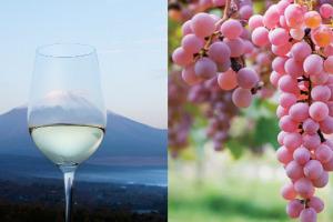 Alle pendici del monte Fuji, alla scoperta del vino tipico del Giappone, quello ottenuto dall'uva Koshu, varietà autoctona del Sol Levante, coltivata in appena 380 ettari da un piccolo numero di produttori che vuole farla conoscere al mondo