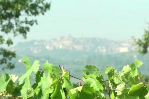 """8 milioni di investimenti in 10 anni, per un territorio del vino che punta a """"emissioni 0"""" in pochi anni: la case history del Nobile di Montepulciano, frutto della sinergia tra imprese, Consorzio ed Istituzioni"""