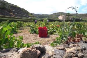 Il Consorzio della Doc Pantelleria compie 20 anni, e dai viticoltori dell'isola arriva un appello all'unità per tornare a crescere, valorizzando nel mondo il Passito e l'alberello pantesco, prima pratica agricola diventata bene immateriale Unesco