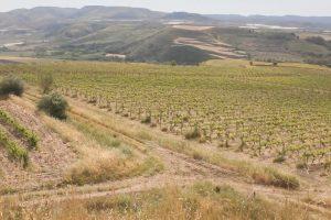 Forte del suo passato, la Sicilia del vino guarda al futuro, da Sicilia en Primeur