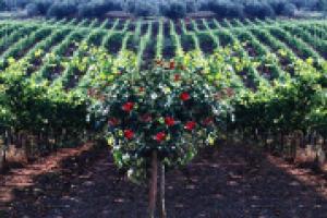 Non solo il Brunello di Montalcino, il Chianti, il Chianti Classico, il Nobile di Montepulciano e la Vernaccia di San Gimignano: la Toscana del vino ha un tesoro nascosto, fatto di denominazioni e territori meno noti