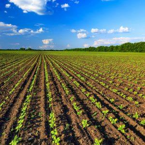 Approvato il nuovo regolamento sull'agricoltura biologica, entrerà in vigore nel 2021