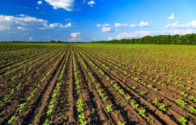 AGRICOLTURA BIOLOGICA, GIAN MARCO CENTINAIO, MINISTERO DELLE POLITICHE AGRICOLE, Non Solo Vino