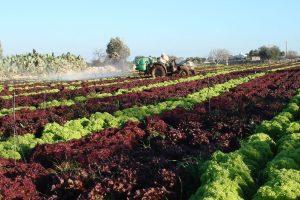 Buono per la salute e per il Pianeta, e sempre più online: il cibo del futuro per FedAgriPesca