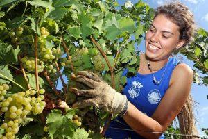 """""""Reintrodurre i voucher in agricoltura"""": così il Ministro delle Politiche Agricole Centinaio"""