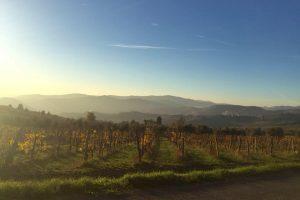 Solfiti, facciamo chiarezza: a WineNews, gli scienziati e le aziende (Fattoria Lavacchio e Salcheto)