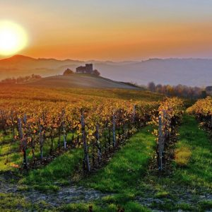 L'Oltrepò Pavese guarda al futuro, tra qualità ed export: a WineNews il neo presidente Luigi Gatti