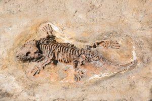 Puglia, al fossile di un dinosauro di 70 milioni di anni il nome di un vino: Primitivus Manduriensis
