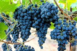 """""""Oggi un vitigno non va considerato autoctono per dove nasce, ma per dove si esprime al meglio"""""""