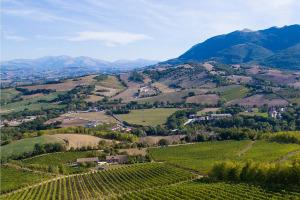 I Quaderni di WineNews - Il Verdicchio delle Marche