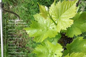 I Vini di WineNews - N. 1